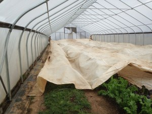 Green Edge high tunnel cover systems